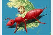 [횡설수설/이광표]붉은불개미의 침공