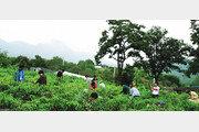 단양군 인구증가에 '귀농귀촌'이 효자 역할