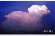 [포토 에세이]구름털 강아지