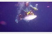 멸종위기 고래상어 등에 올라탄 무개념 스쿠버다이버들 체포