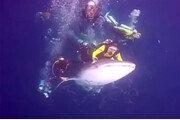 고래상어 괴롭힌 다이버들 체포