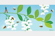 [포도나무 아래서]〈10〉뒤뚱거리며 꿀벌들이 돌아왔다