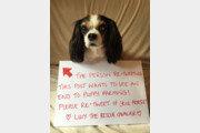 '강아지 농장 금지' 루시의 꿈, 5년만에 이루어지다
