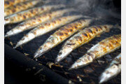 [스스무의 오 나의 키친]〈42〉일본의 '가을 생선' 꽁치