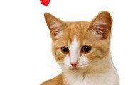 [신문과 놀자!/환경 이야기]반려동물 사랑하는 마음이 환경보호로 이어질 수 있어요
