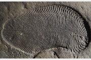 5억5800만년 前… 가장 오래된 다세포동물 화석 발견