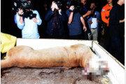 """야생성 박탈된 전시품들의 고통…""""동물원 꼭 필요한가"""" 확산"""