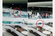 [영상]막아놓은 지름길로 달리던 여성, 상어 수족관에 '풍덩'