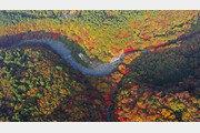 [드론으로 본 제주 비경]한라산의 은은하고 수수한 오색빛깔 단풍
