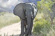 [왕은철의 스토리와 치유]〈63〉코끼리의 애도