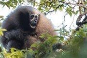 WWF, 동남아 밀림서 새로운 157개 종 발견…이미 멸종위기