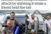 '몸길이 2m' 상어에 물린 20대, 손가락으로 눈 찔러 위기 탈출