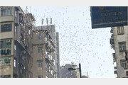 빈민가 건물 옥상에서 돈 2900만원 뿌린 남성 체포