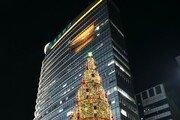 [원대연의 잡학사진]감귤…공작…블록…형형색색 크리스마스 이색트리