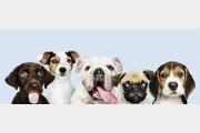 [책의 향기]인간과 함께 사는 개들은 행복할까?