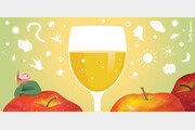 [포도나무 아래서]〈19〉효모가 방귀 뀌면 술이 익어간다