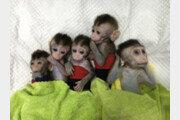 中, 유전자 편집 활용 원숭이 5마리 복제 성공