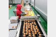 농가-상인 손에 맡긴 '셀프검사'… 노른자 빠진 계란 안전