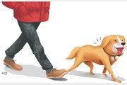 개-고양이 등 반려동물 맡긴 뒤 연락두절…펫호텔·펫시터들 난감
