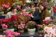 활짝 핀 봄꽃