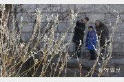 [청계천 옆 사진관]봄이 오는 청계천