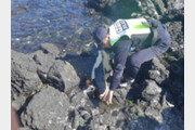 제주 해안가서 멸종위기 보호종 상괭이 사체 발견