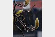 [날씨]미세먼지 씻어내는 반가운 봄비…제주도 150㎜ 이상