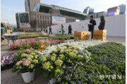 [청계천 옆 사진관]빨주노초…색동옷 갈아입은 서울광장 '봄꽃 단장'