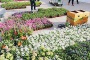48종 봄꽃으로 단장하는 서울광장