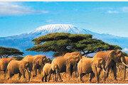 잠비아-에티오피아 등 9일간의 여행 '살아 있는 아프리카'를 느끼다