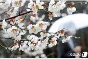 [날씨] 21일 비 그친 뒤 오후부터 찬공기…'꽃샘추위' 예고