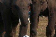 코뿔소 밀렵꾼, 코끼리에 밟혀 죽은 뒤 사자떼에 시신 뜯어먹혀