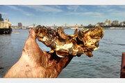 굴이 더러워진 뉴욕항을 청소할 수 있을까?