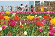 송현근린공원에 튤립 활짝