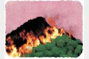 [날씨 이야기]산불에 대한 4가지 오해