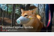 """BBC """"한국 대기오염 최악…견공도 마스크 쓰는 나라"""""""