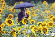 [날씨]15일 낮부터 서울·중부 비…일부지역 강한 비·우박