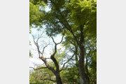 """[휴지통]공원서 467kg 나뭇가지 날벼락… 법원 """"국가 1700만원 배상해야"""""""