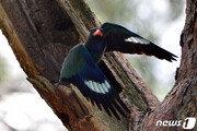 포항 기계면 숲 속에는 동화 속 주인공 파랑새가 살고 있다