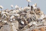 멸종위기종 저어새 1년만에 귀환했다