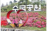 신안군 작은 섬 '200만 송이 수국'의 재발견