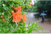 [날씨]26일 제주·남부부터 장마 시작…밤 전국 비소식
