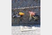 [고양이 눈]날아라 자전거