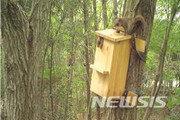 영산강환경청, 멸종위기종 '하늘다람쥐' 인공둥지 정착 확인