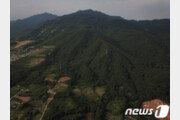 제천 박달재 인근 10ha에 자작나무 명품숲 조성
