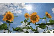 [날씨]31일 경상 내륙·동해안 35도 찜통 지속…중부엔 비