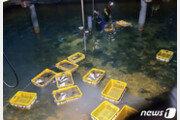 27도 웃도는 포항 앞바다서 사흘간 물고기 2만여마리 폐사