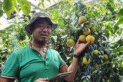 """스마트폰으로 감귤 농사 짓는 여유로운 농부 """"9시 출근해 6시 퇴근합니다"""""""