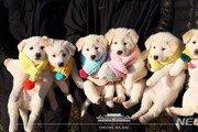 북한이 청와대에 선물한 풍산개가 낳은 강아지 2마리 대전 오월드 품으로