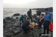 해경, 서귀포 해안가서 폐그물에 걸린 바다거북 2마리 구조
